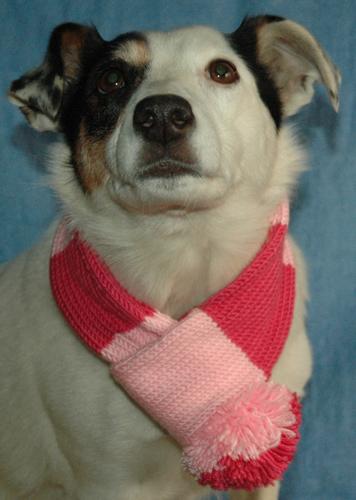 dog-scarf