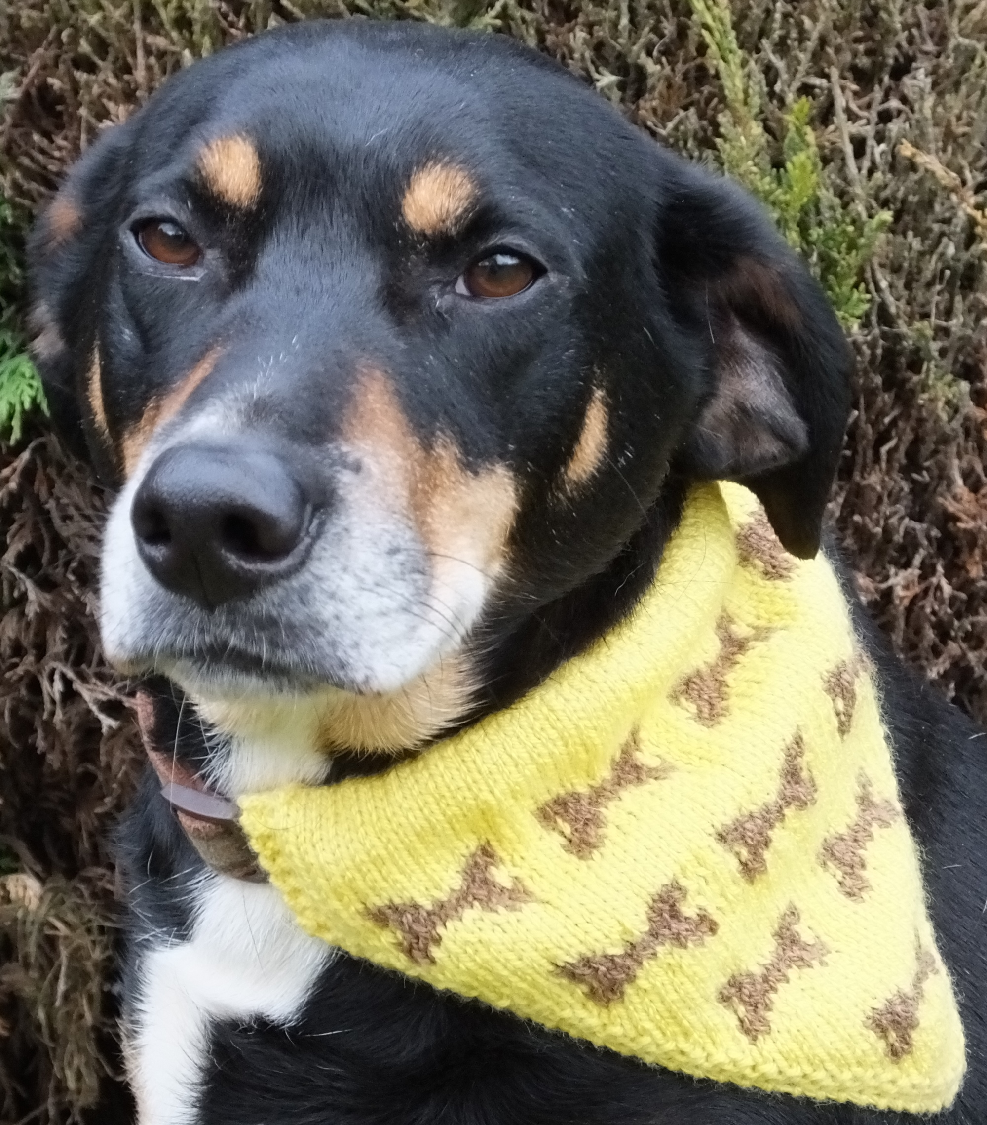 Knitting Pattern With Dog Motif : DK   Knitting pattern   Dog Kerchief, 4 sizes, 4 styles ...