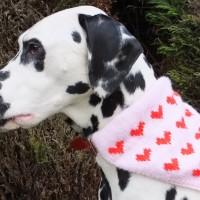 Domino modelling the heart motif kerchief